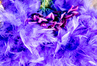 Roses in Purple Feathers Bouquet